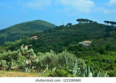 Italy-view on the meadow with opuncie in town Rio Nell´elba on the island of Elba