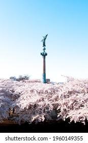 Ivar Huitfeldt Column with Cherry Blossom Trees in Copenhagen