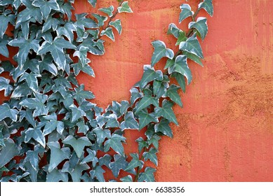 ivy-climbing-on-textured-bright-260nw-66