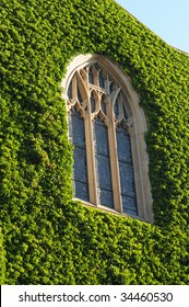 Ivy Covered Wall on Old Building