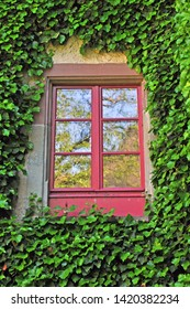 ivy Frame with red window