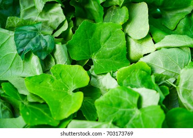Ivy Gourd leaves, Ingredients for cooking and herbs.