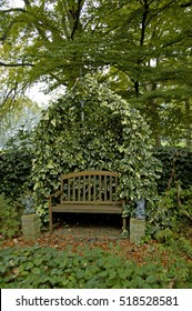 ivy growing around garden bench