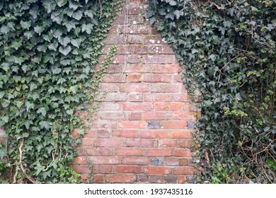 Ivy growing on an old brick wall with copy space - landscape horizontal orientation