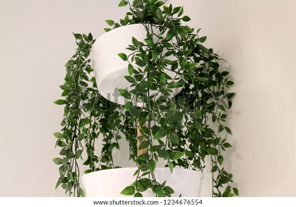 Ivy Houseplant Home Flowers Made Flat Stock Photo (Edit Now ... on ivy texture, ivy and flowers, poison ivy plant flower, ivy vine in the garden, ivy with flower beds,