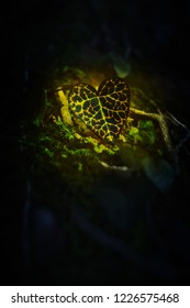 Ivy leaf, green and yellow in dark, illuminated with sunlight, heart shaped