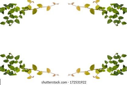 Clip Art Common Grape Vine Borders And Frames Image, PNG, 615x593px, Common  Grape Vine, Borders And