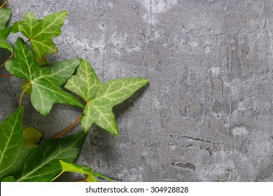 Ivy leaves on a stone background