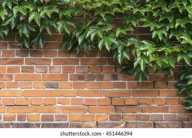 Brick Wall Floral Vines Images Stock Photos Vectors