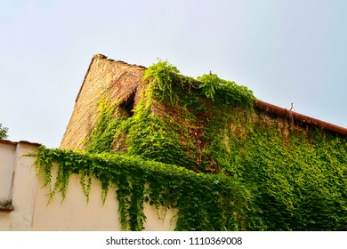 Ivy on an old bulding. Romantic urban scenery.
