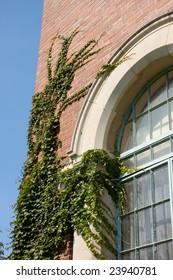Ivy on University Building.
