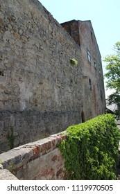 Ivy on wall of Buchlov castle, Czech republic