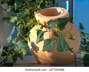 ivy and pottery in glaring sun light