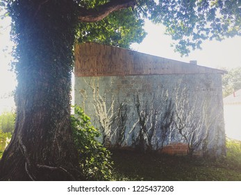 Ivy Texture on building and tree