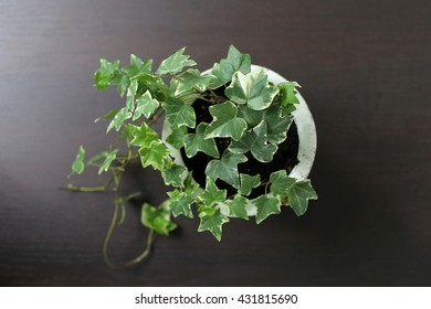 Ivy. Top view
