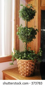 Ivy Topiary House Plant