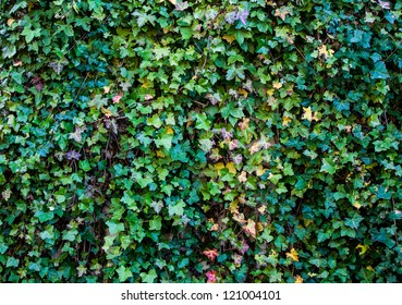 Ivy Wall background shot