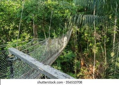Iwokrama Canopy walkway - Views around Guyana's Interior and rainforest