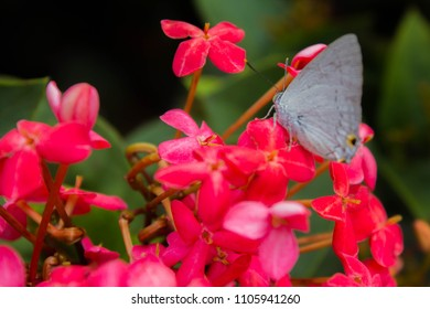 Ixora flower and butterfly