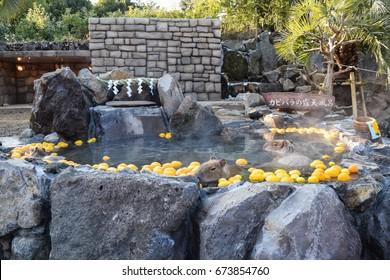 Izu, Japan. December 2015 - Capybaras enjoy a hot bath with yuzu fruits at Izu Shaboten Park.