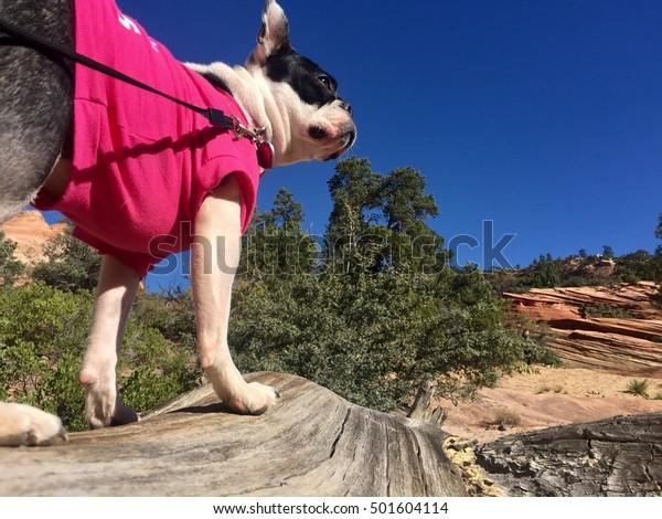 Izzy's Adventure in Zion National Park