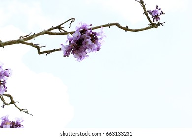Antananarivo images stock photos vectors shutterstock jacaranda flowers are on blue sky background gumiabroncs Gallery