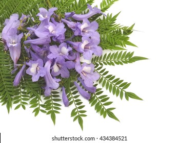 Jacaranda leaves and fallen blooms