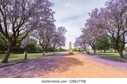 Jacaranda over rural street in Victoria Park, Dubbo, NSW, Australia.