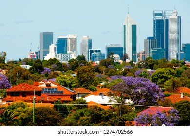Jacaranda Trees Blooms - Perth - Australia