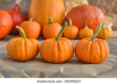 Jack be little cute pumpkins decoration. Autumn harvest