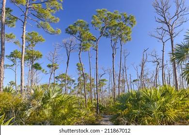 Jack C Watson Nature Trail on Big Pine Key