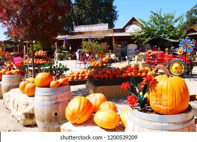 Jack Creek Farm Oct 9 2018 Templeton CA : Variety of decorative pumpkin squash display by store for Halloween season