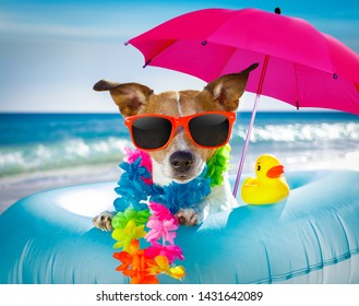 jack russel dog resting and relaxing on a air mattress or swim ring   at the beach ocean shore, on summer vacation holidays