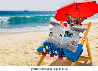 jack russel dog resting and relaxing on a hammock or beach chair under umbrella at the beach ocean shore, on summer vacation holidays reading a magazine or newspaper