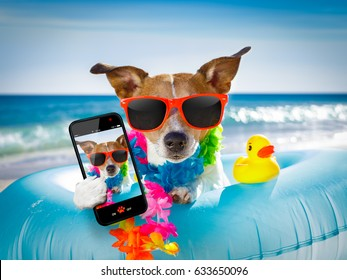 jack russel dog resting and relaxing on a air mattress or swim ring   at the beach ocean shore, on summer vacation holidays taking a selfie with smartphone or mobile phone