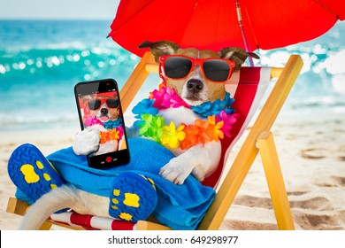jack russel dog resting and relaxing on a hammock or beach chair under umbrella at the beach ocean shore, on summer vacation holidays taking a selfie with smartphone or mobile phone or telephone
