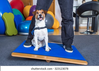 jack russel terrier in dog therapy