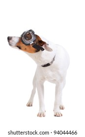 Jack Russel Terrier purebred dog with goggles isolated on white background