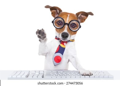jack russell dog booking a reservation online using a pc computer laptop keyboard ,with high five paw ,isolated on white background