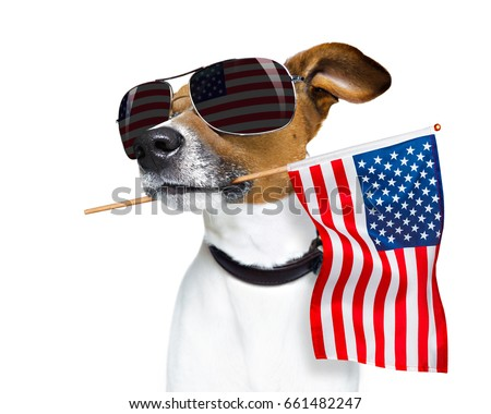 jack russell dog celebrating  independence day 4th of july with  usa flag in mouth,  isolated on white background