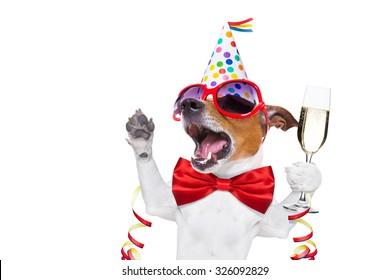 jack russell chien fêtant la nouvelle année avec du champagne et chantant à haute voix, isolé sur fond blanc