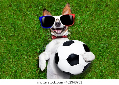 jack russell dog with  football