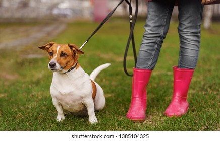Jack russell dog and girl in red boots  walking in spring park. Healthy lifestyle, happy childhood concept.