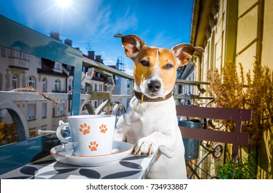 jack russell dog having a coffee or tea break on balkony with cup and spoon on table , enjoying the nice weather in the sun