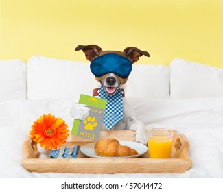 jack russell dog in hotel  having room service with key card in paw with breakfast in bed