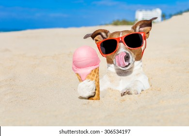 jack russell dog licking ice cream with tongue buried in sand  at the ocean beach in summer vacation holidays, wearing red funny  sunglasses