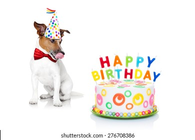 jack russell dog  with licking  tongue and hungry for a happy birthday cake with candles ,wearing  red tie and party hat  , isolated on white background