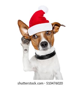 jack russell dog listening with one ear very carefully, with red santa claus hood or hat , for xmas or christmas holidays