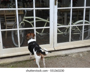 jack russell dog looking through window at tandem bike