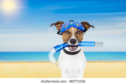 jack russell dog  with mask and  snorkel at the beach